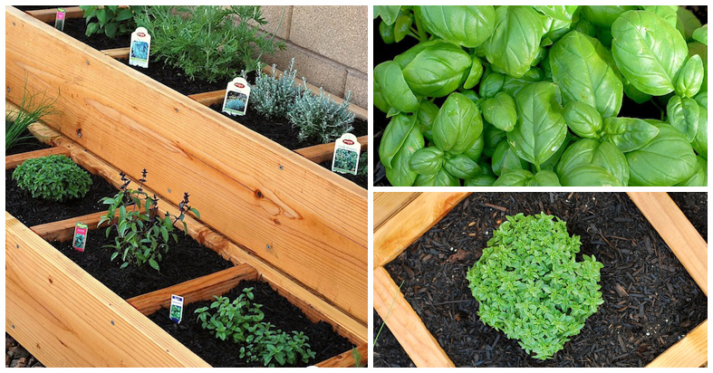 Fantastic Raised Bed Herb Garden Idea