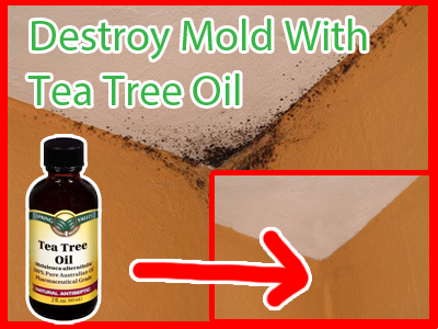 How To Remove Mold With Tea Tree Oil