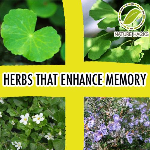 5 Herbs That Improve Memory
