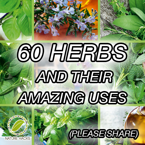 60-herbs-and-their-amazing-uses