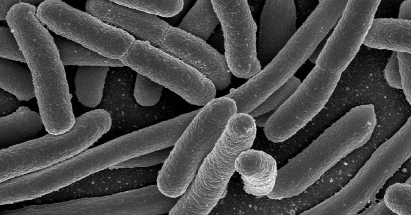 Gut Bacteria May Influence Mental Health in Humans - FB