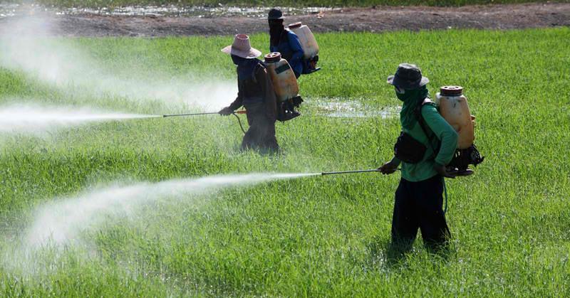 New U.N. Report Estimates Pesticides Kill 200,000 People Per Year