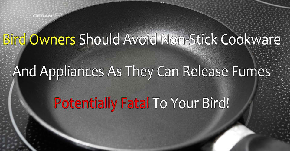 WARNING: Non-Stick Cookware Releases Fumes That Can Kill Pet Birds